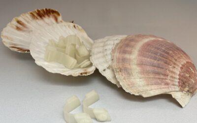 À Dieppe, les coquilles Saint-Jacques sont transformées en objets utiles grâce à l'impression 3D